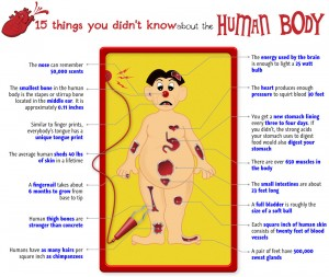 operation 300x253 The Human Body   Fun Facts to Know